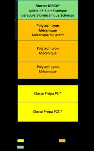 Bac+5 école d'ingénieur Polytech Lyon, biomécanique, master mécanique énergétique génie civil acoustique_a