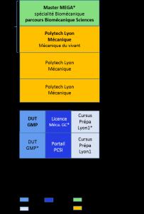 Bac+5 PCSI, mécanique, génie civil, école d'ingénieur polytech lyon, biomécanique_b