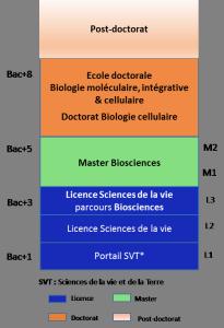 Schéma des études pour doctorat biologie cellulaire, biosciences, biologie moléculaire