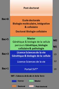 Doctorat biologie moléculaire et célullaire, génétique, sciences de la vie_b